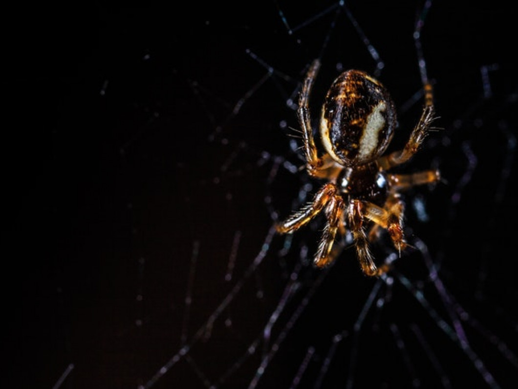 Discourage spiders from entering your home